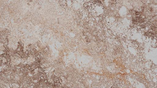 Bild von 4046 Excava Caesarstone