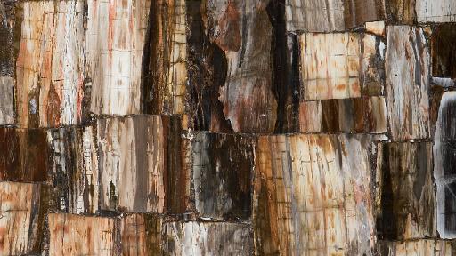 Bild von 8331 Petrified Wood Classic Caesarstone