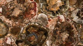 Bild von 8330 Petrified Wood Caesarstone